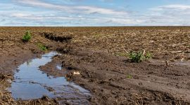 Jo Handelsman urges scientific community to address soil crisis in Scientific American editorial